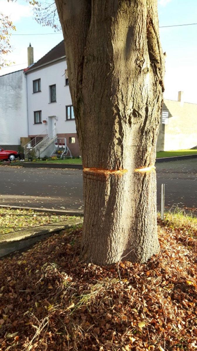 Wer hat diesen Baum ermordet?